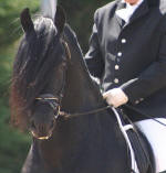 Nero Friesian Sport Horse Stallion